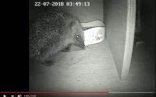 Hedgehog camera kit