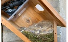 nest building in box | gardenature