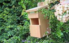 open front IP camera bird box