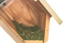 sideview bird box. gardenature
