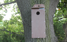 plywood starling box