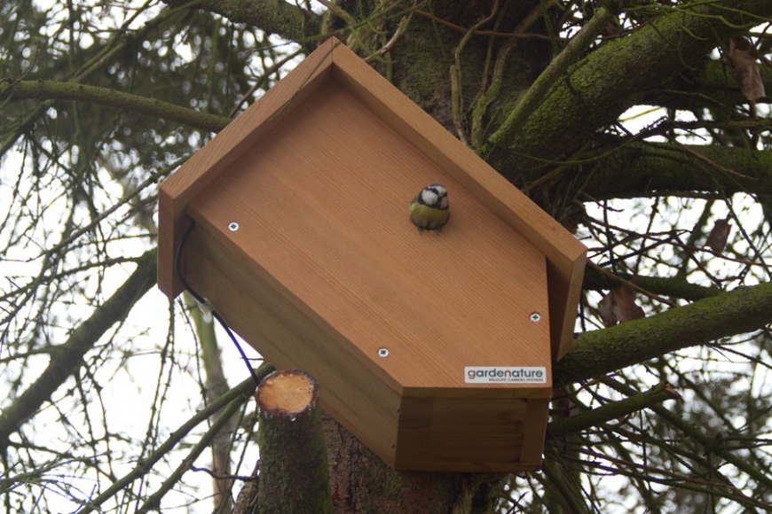Sideview camera box | gardenature.co.uk