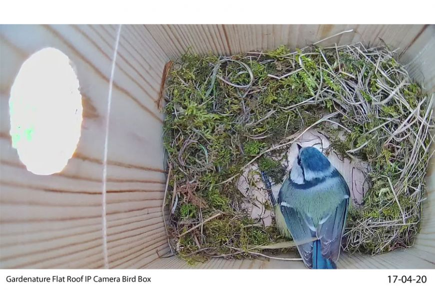 IP Nest box cam | Gardenature