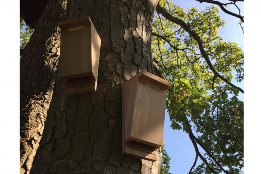 bat box for trees