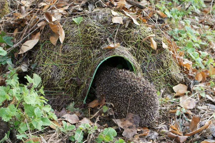 hogitat hedgehog - gardenature.co.uk