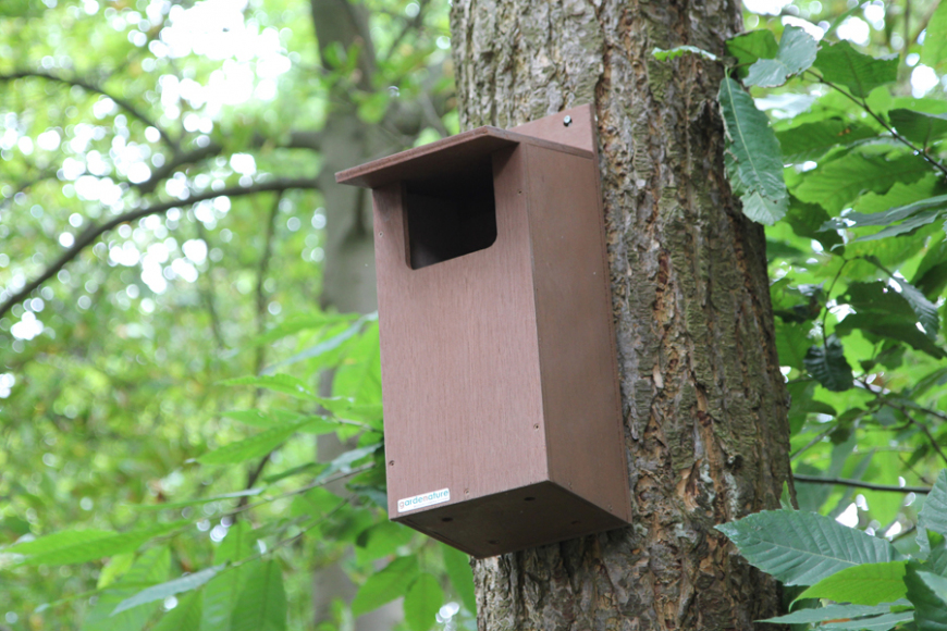 Little owl box camera system