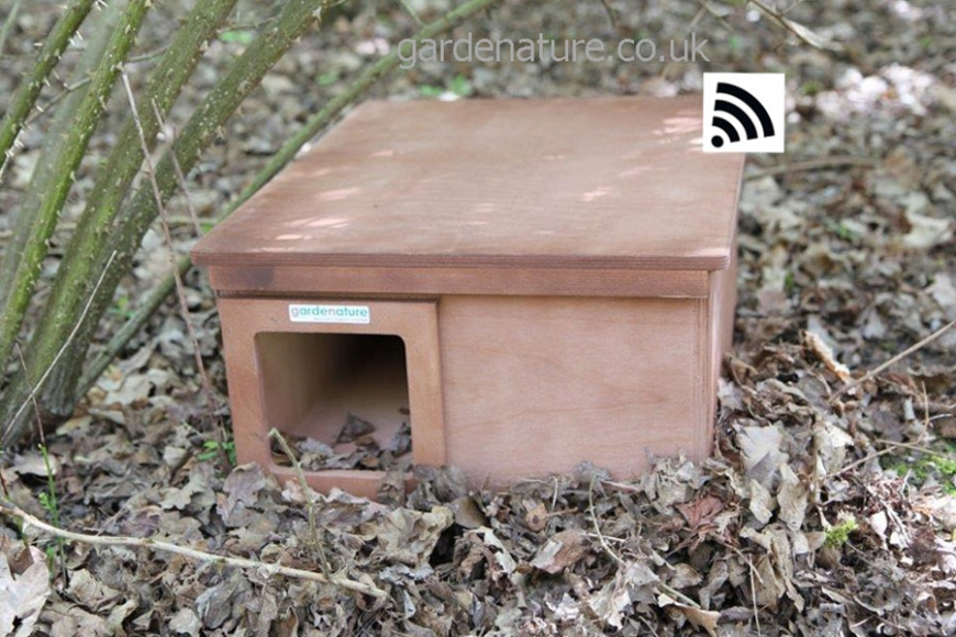 wireless hedgehog box camera