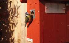 Blue tit nest box flutter