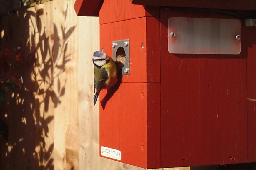 wireless camera bird boxes