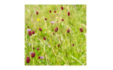 seedball wildflower mix | gardenature