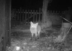 Night Vision Cameras | Wild View Cameras