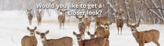 Binoculars & Scopes - Wildlife Watching | Wild View Cameras