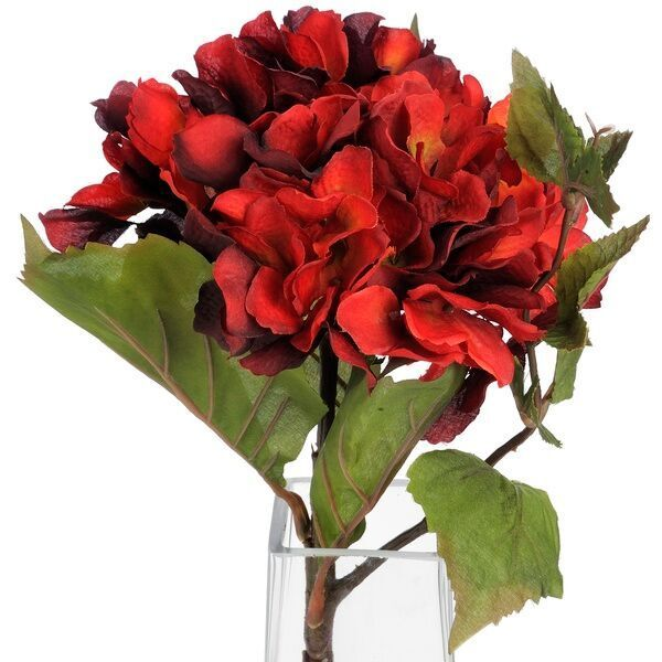 Single Red Hydrangea Stem