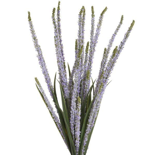 Lavender Ava Amelia Veronica Stem