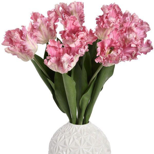 Pink Parrot Tulip Stem
