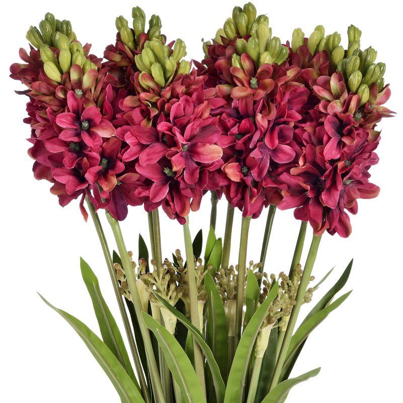 Burgundy Hyacinth Stem