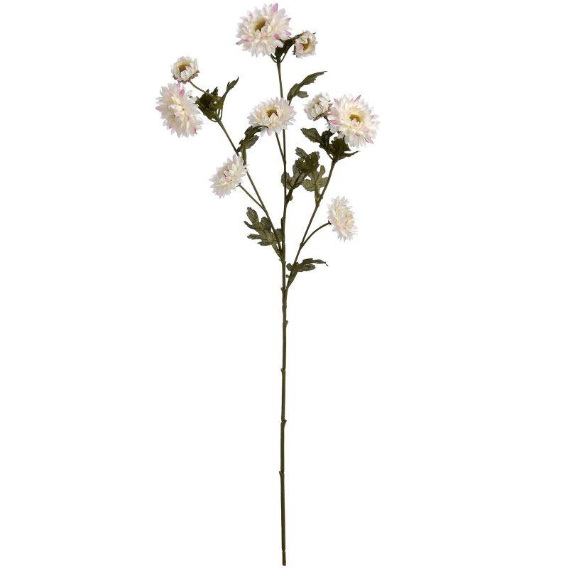 Wild White Dahlias