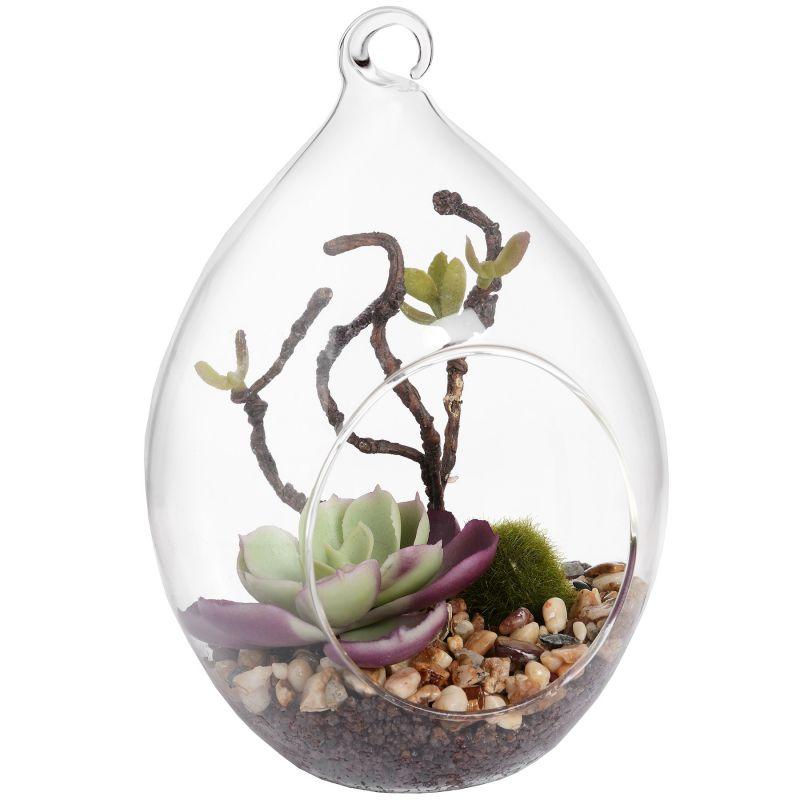 Hanging Air Terrarium With Succulent Plant