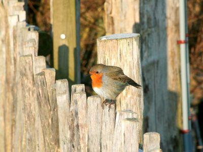 Vogels voederen in de tuin tijdens de winter