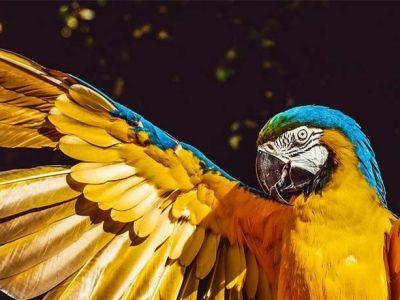 Les compléments alimentaires pour oiseaux