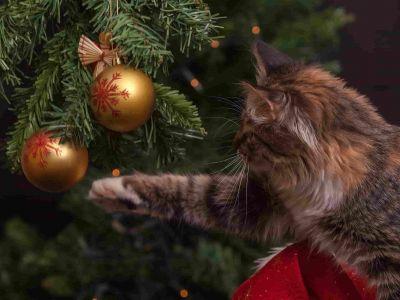 Wat als je kat gek is op de kerstboom?