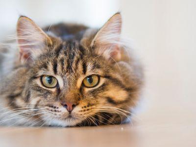 Tips voor stress bij katten