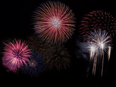 Why are cats and dogs scared of fireworks?
