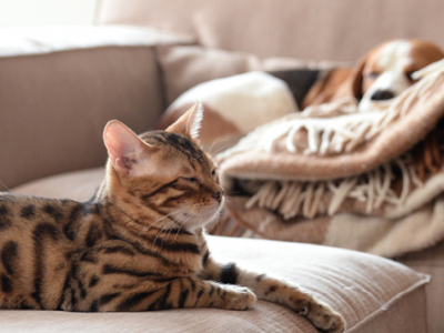 How to protect your home from fleas