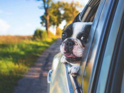 Partir en vacances en voiture avec son chien