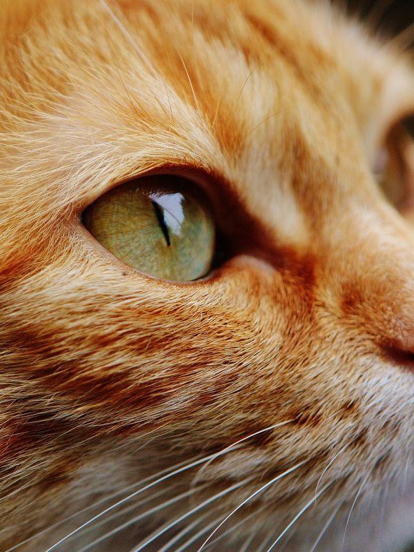 Kotom nie wolno aplikować preparatów z permetryną.