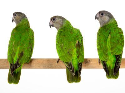 Rui van vogels