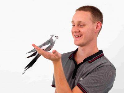 Hoe maak je je vogel handtam?