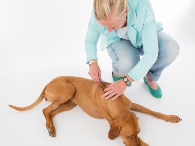 Hoe een pipet aanbrengen bij mijn hond of kat?