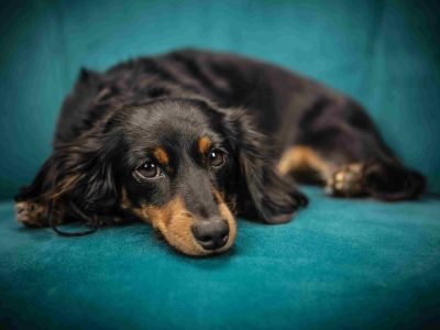 Le stress chez votre chien ou votre chat