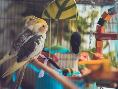 Bilan de santé chez les oiseaux
