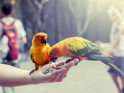 Comment nourrir son oiseau?