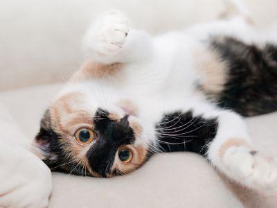 Wat als je kat plots in huis begint te plassen?