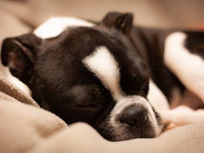 CaniComfort de Beaphar : Produits calmants pour les chiens à base de phéromones