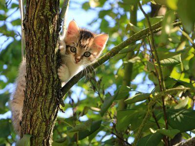 Kat naar buiten