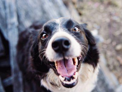Hoe de ogen van je hond of kat goed reinigen?