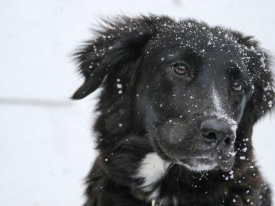 Sneeuwpret met je hond: zo hou je het veilig