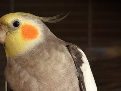 Pas op, dit is giftig voor je vogel!