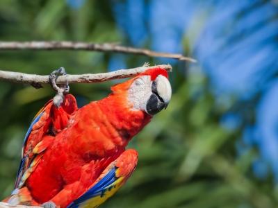 Bloedluizen bij vogels