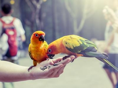 Voeding & Snacks voor uw vogel