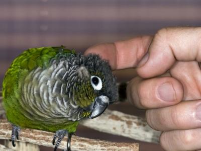 Lekkernij voor vogels om zelf te verzamelen: (on)kruid en insecten