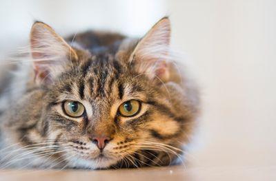 Kat plast in huis: hoe los ik dit op?