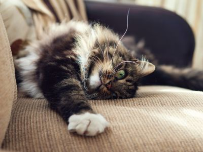 Choosing the right calming product for your cat