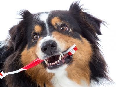 Higiena jamy ustnej u psów