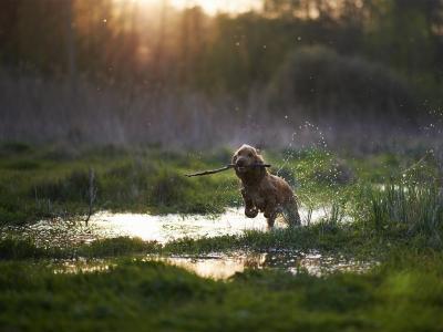 Hond met gewrichtsproblemen?