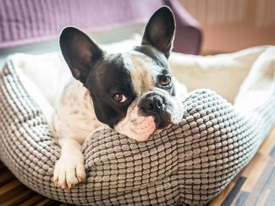 No Stress: kalmeert honden en katten bij vuurwerkangst